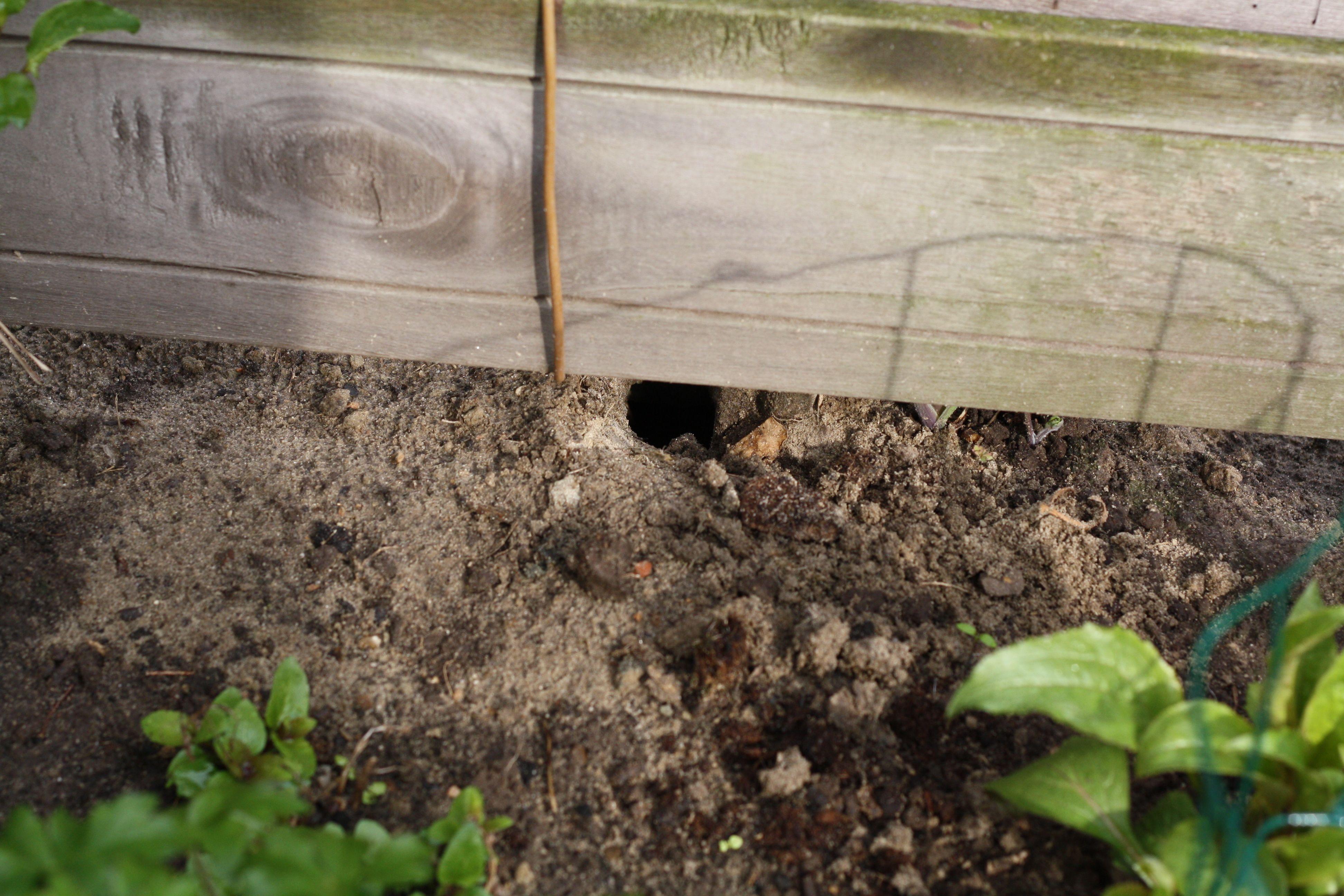 muizen in tuin