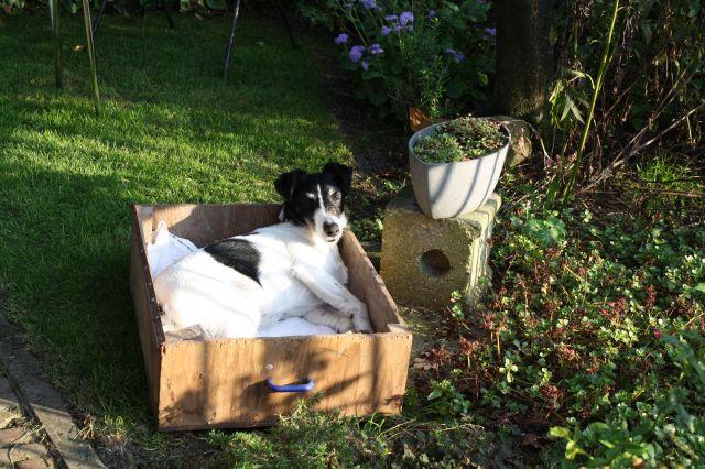 Hond in 't bakkie