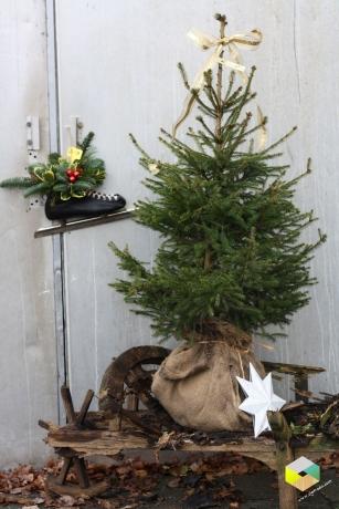 kerstboom op oude kruiwagen