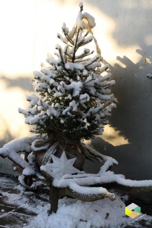 kerstboomindensneeuw